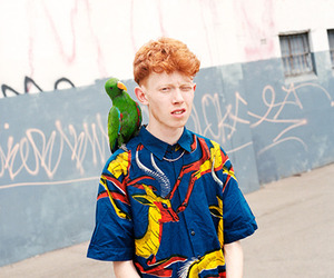 parrot and king krule image