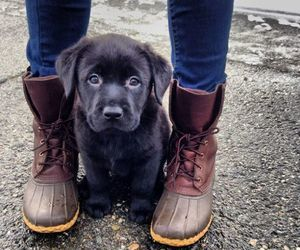 dog, girl, and shoes image