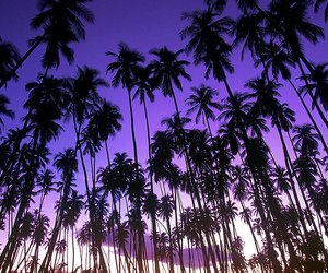 purple, palms, and photography image