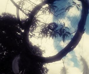 dreamcatcher, tree, and dreams image