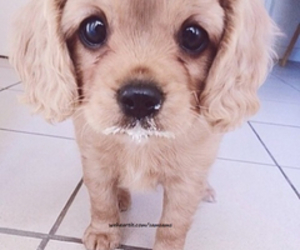 awesome, puppy, and cute image