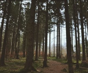 forest, tree, and vintage image