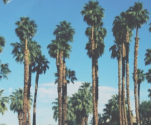 summer, palm trees, and california image