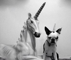 animals, black and white, and funny image