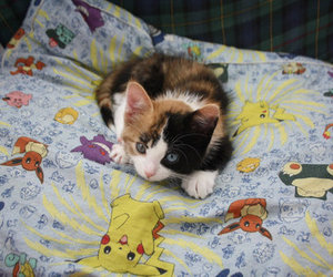 cat, pokemon, and cute image