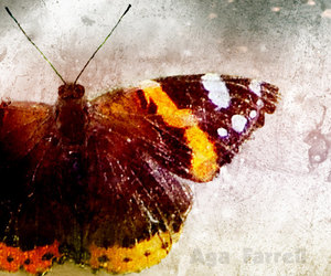 beauty, butterfly, and nature image