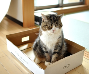 box and cute image