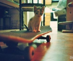 cat, skate, and kitten image