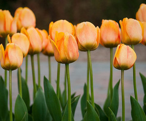 flowers, green, and orange image