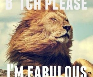 fabulous, lion, and bitch image