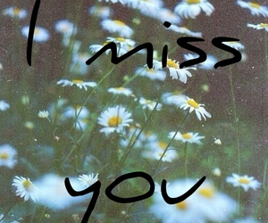 daisy, flowers, and i miss you image