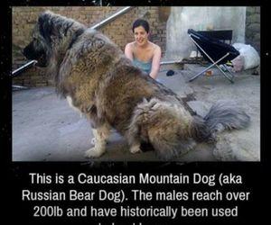 awesomeness, bear, and dog image