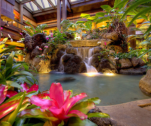 flowers, water, and waterfall image
