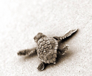 beach, places, and turtle image