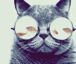 cats, glasses, and sophisticated image