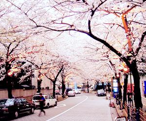 street, tree, and car image