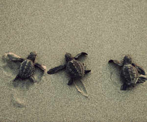 <3, animals, and turtles image