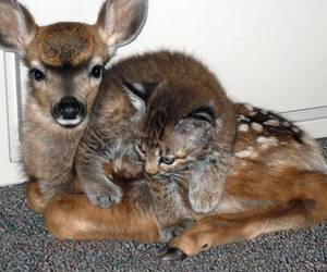 deers and cats image