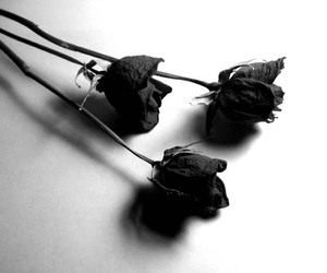 b&w, black rose, and dead image