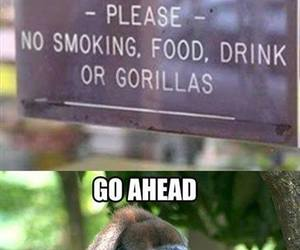 funny and gorilla image