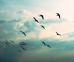 birds, happiness, and clouds image