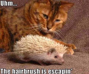 cat, funny, and hairbrush image