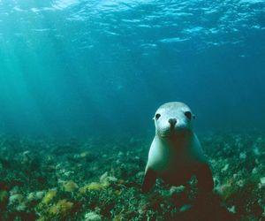animal, sea, and underwater image