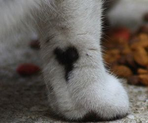 heart, cat, and paws image