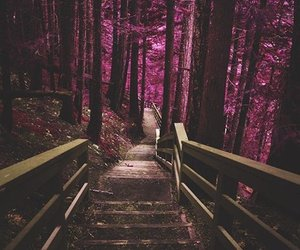 forest, beautiful, and pink image