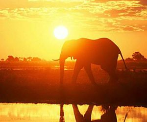 elephant, sunset, and light image