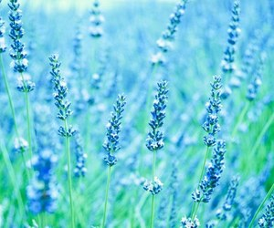 flowers, blue, and green image