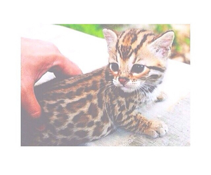 ocelot, cute, and pastel image