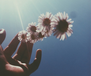 flowers, sky, and hipster image