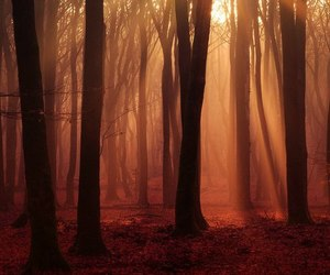 forrest, light, and nature image