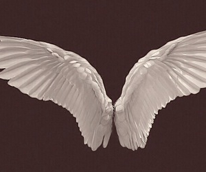 angel, overlay, and wings image