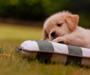 puppy love cute baby image