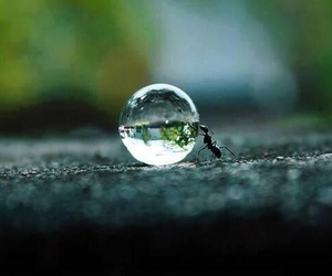 ant, cool, and water image