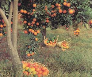 orange, tree, and fruit image