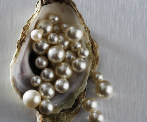 pearls and shell image