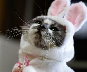 cat, rabbit, and animal image