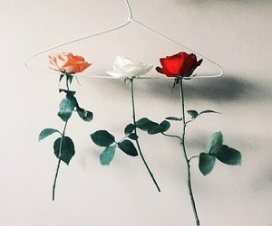 art, sweet, and flower image