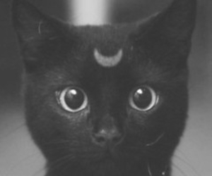black and white, grunge, and meow image