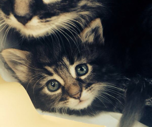 adorable, animals, and blue eyes image