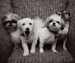 4, dogs, and cute image