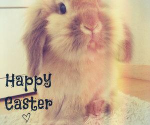 adorable, animal, and bunny image