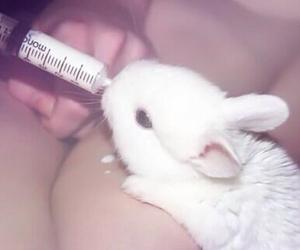 cute, rabbit, and milk image