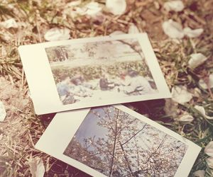 beuty, grass, and memories image