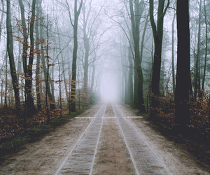 forest, walks, and fog image