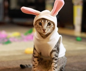cat, bunny, and easter image