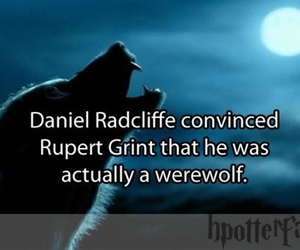 funny, daniel radcliffe, and harry potter image